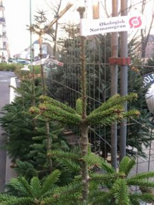 juletræ øko