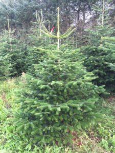 salg af juletræer frederiksberg